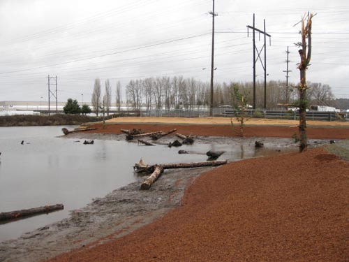 North Wind's Weir (Site 1) Duwamish Salmon Habitat